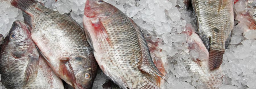 Frozen-fish-refrigerated-truck